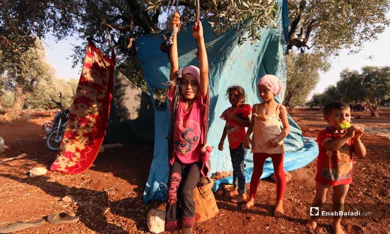 Random IDPs camp under olive trees - August 18, 2019 (Enab Baladi)