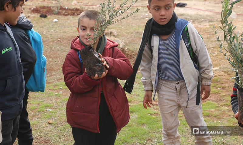 Children participating in tree of liberty campaign for planting olive tree saplings in the village of Kafr Aruq in rural Idlib - 8 December 2019 (Enab Baladi)