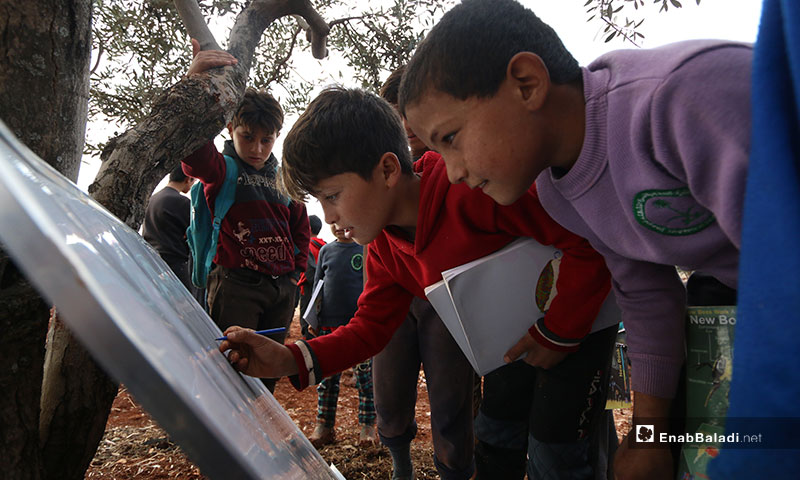 Teaching under olive trees in the Sinjar al-Kahraba camp, in the northern countryside of Idlib - December 3, 2019 (Enab Baladi)