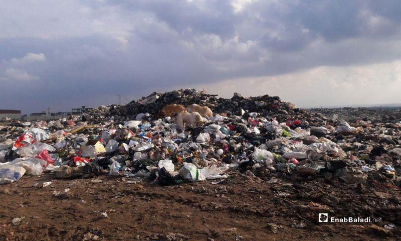 Dogs in a garbage dump in Daraa Governorate - (Enab Baladi)