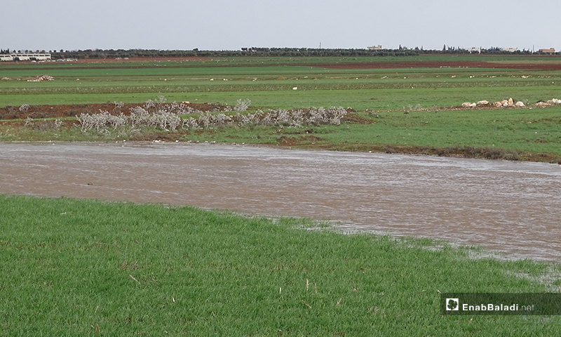 A photo shows the flood of the Queiq River  in the town of Dabiq in the northern countryside of Aleppo, for the first time this year - 8 February (Enab Baladi)