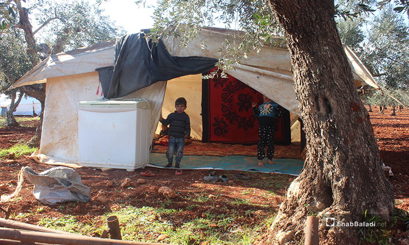 Establishing a new camp for IDPs on the outskirts of Kaftin village in Idlib province - 10 February 2020 (Enab Baladi)