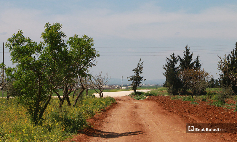 Agricultural land in Dabiq town northern countryside of Aleppo – 16 April 2020 (Enab Baladi)