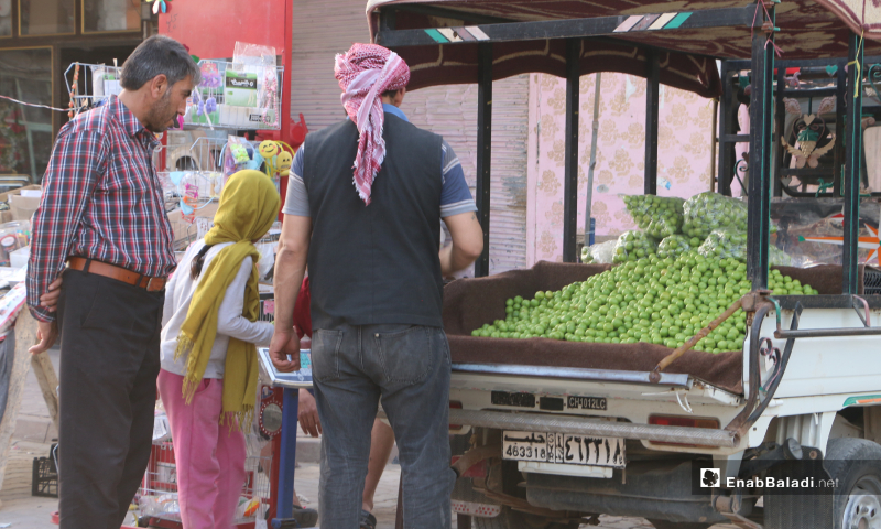 A man selling the greengages plum in Marea city's street market in Aleppo countryside – 20 May 2020  (Enab Baladi - Abdul al-Salam Majaan)