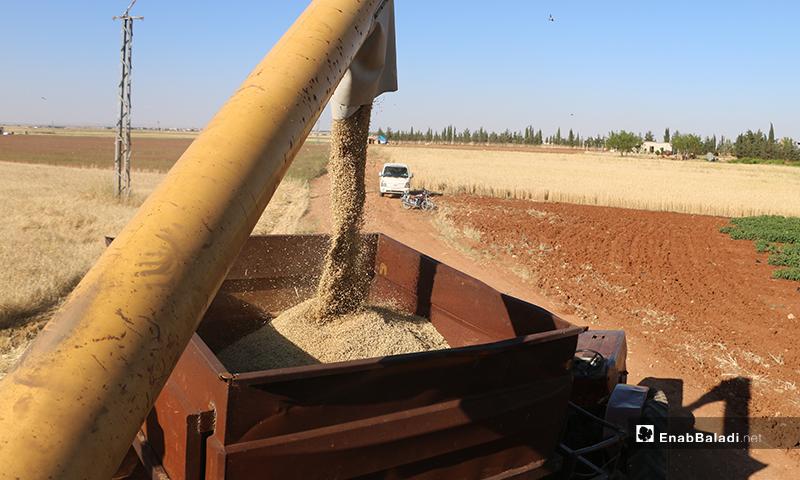 A combine harvester discharging barley grains into a trailer – 30 May 2020 (Enab Baladi / Abdul al-Salam Majaan)
