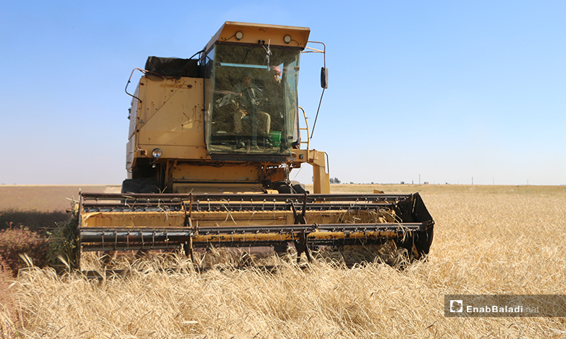A combine harvesting barley crops in northern Aleppo countryside – 30 May 2020 (Enab Baladi / Abdul al-Salam Majaan)