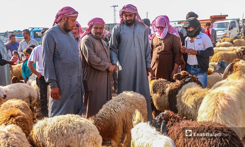The purchase of sheep in Arshaf town days before Eid al-Adha – 27 July 2020 (Enab Baladi / Abdul Salam Majan)