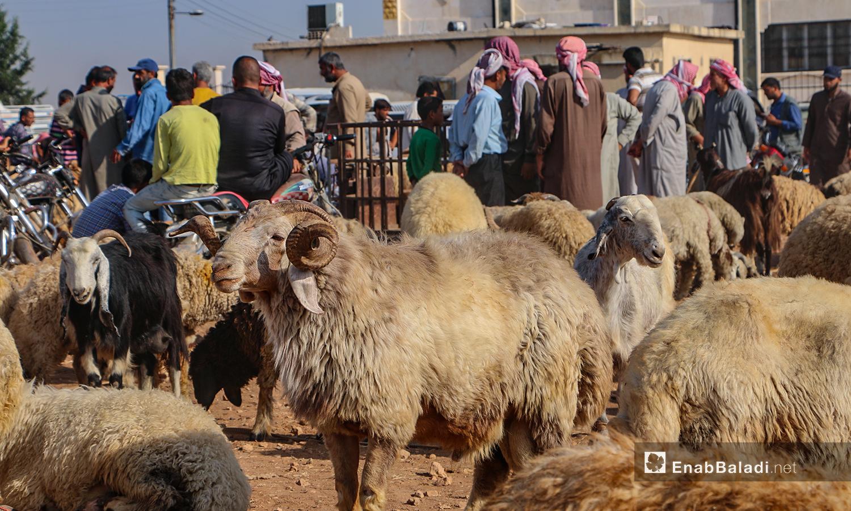 The sheep market in Arshaf town of northern Aleppo countryside days before Eid al-Adha – 27 July 2020 (Enab Baladi / Abdul Salam Majan)