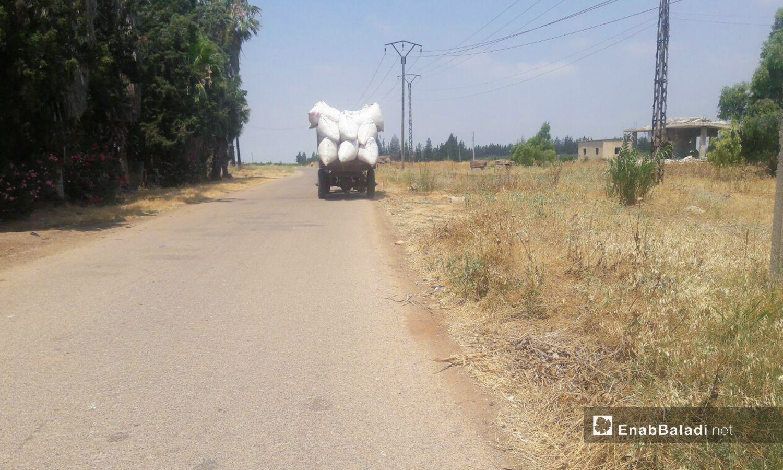 Wheat harvesting season in western Daraa countryside – 05 July 2020 (Enab Baladi / Halim Mohammed)