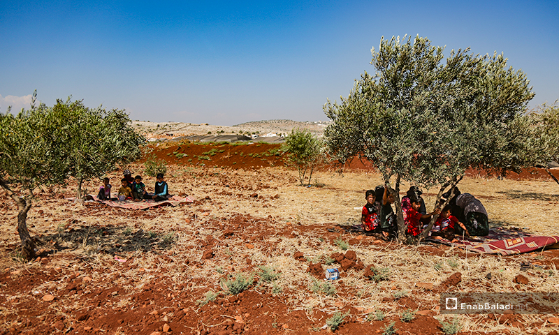 Families sitting under olive trees to escape the summer heat in the camps of internally displaced people (IDPs) in northern Idlib countryside – 07 July 2020 (Enab Baladi / Yousef Ghuraibi)