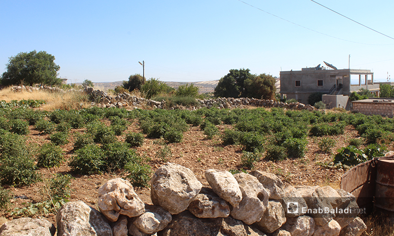Arshin village on the al-Summaq Mountain of northern Idlib countryside – 17 June 2020 (Enab Baladi / Iyad Abdel Jawad)