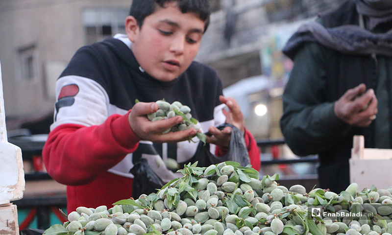 A child selling green almonds on his cart in the market of Idlib city - 7 April (Enab Baladi)