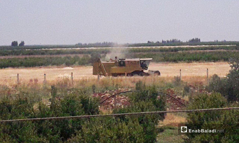 A combine harvesting wheat in western Daraa countryside – 05 July 2020 (Enab Baladi / Halim Mohammed)