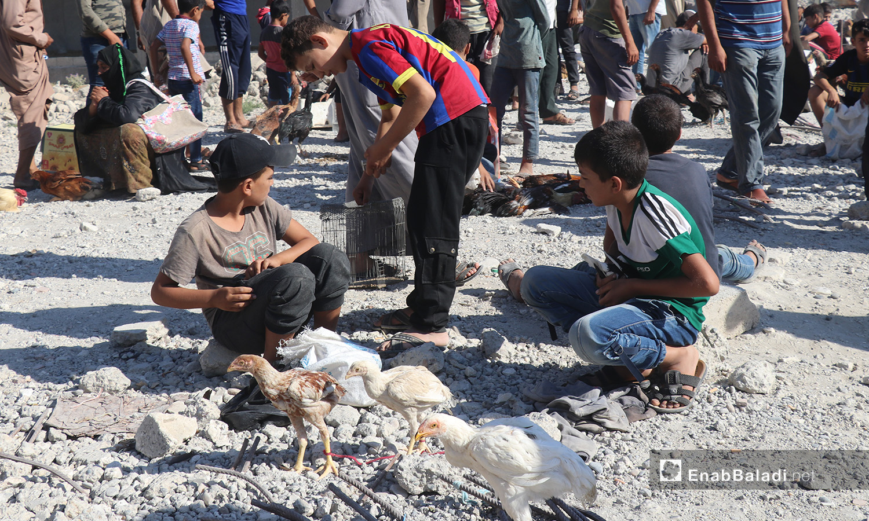 Children selling chickens in the Friday street market in al-Raqqa city - 08 August 2020 (Enab Baladi / Abdul Aziz al-Saleh)
