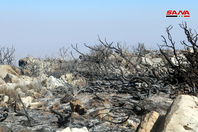Remains of burned trees due to fire in Northern Syria - September 2020 (SANA)