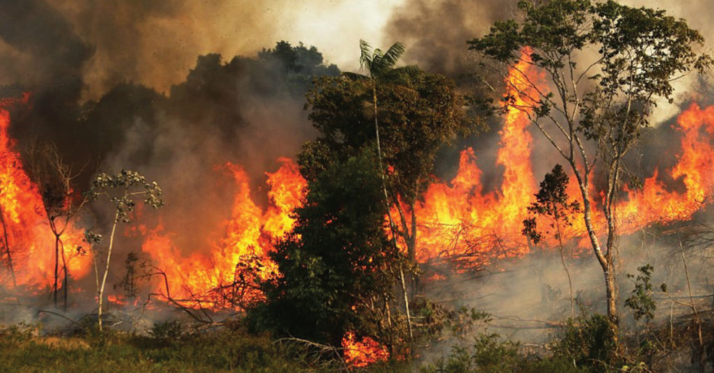 Trees on fire in the western countryside of Hama - September 2020 (AFP)