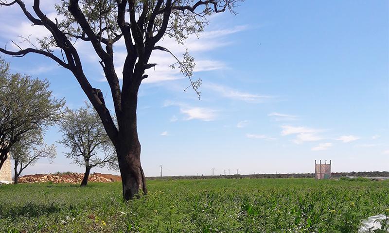 A farmland in the al-Rai town in north-eastern Aleppo (Muhamet Kadu Oklu)