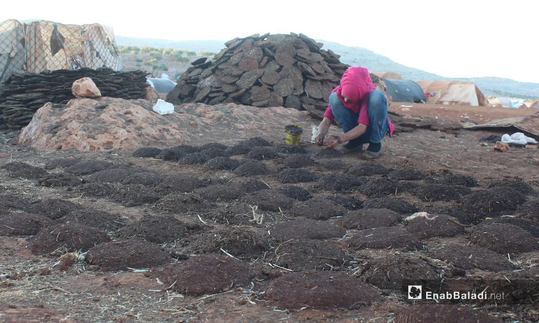 "A young girl preparing dung fuel in the ""al-Ramdoun"" camp in Kafr Aruq town, north of Idlib - September 2020 (Enab Baladi -Iyad Abdel Jawad)"