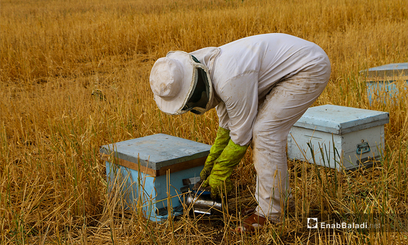 A beekeeper stands at the beehive, inspecting the production of honey - 3 June 2020 ((Enab Baladi / Abdul Salam Majan)