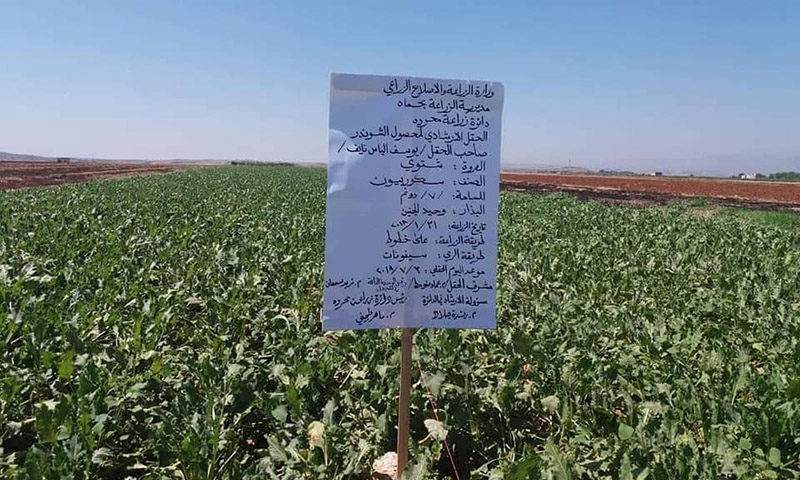 Agricultural lands in Hama countryside (Peasant's Union of Hama Governorate)