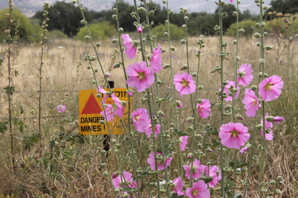 A warning sign near the demilitarized zone in the occupied Syrian Golan (shutterstock)