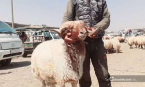 A man hugging a sheep in the livestock market in the city of Raqqa, just before Eid al-Adha - 29 July 2020 (Enab Baladi)