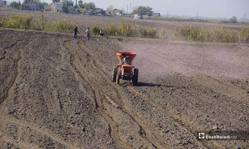 Seed planting season in the Ghab Plain in Hama countryside - 26 November 2018 (Enab Baladi)