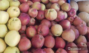 Aleppo Apples - 28 May 2021(Enab Baladi-Saber al-Halabi)