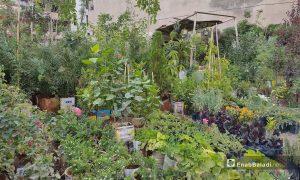 A plant nursery at Qamishli city in al-Hasakah governorate, northeastern Syria - 25 June 2021 (Enab Baladi / Majd al-Salem)
