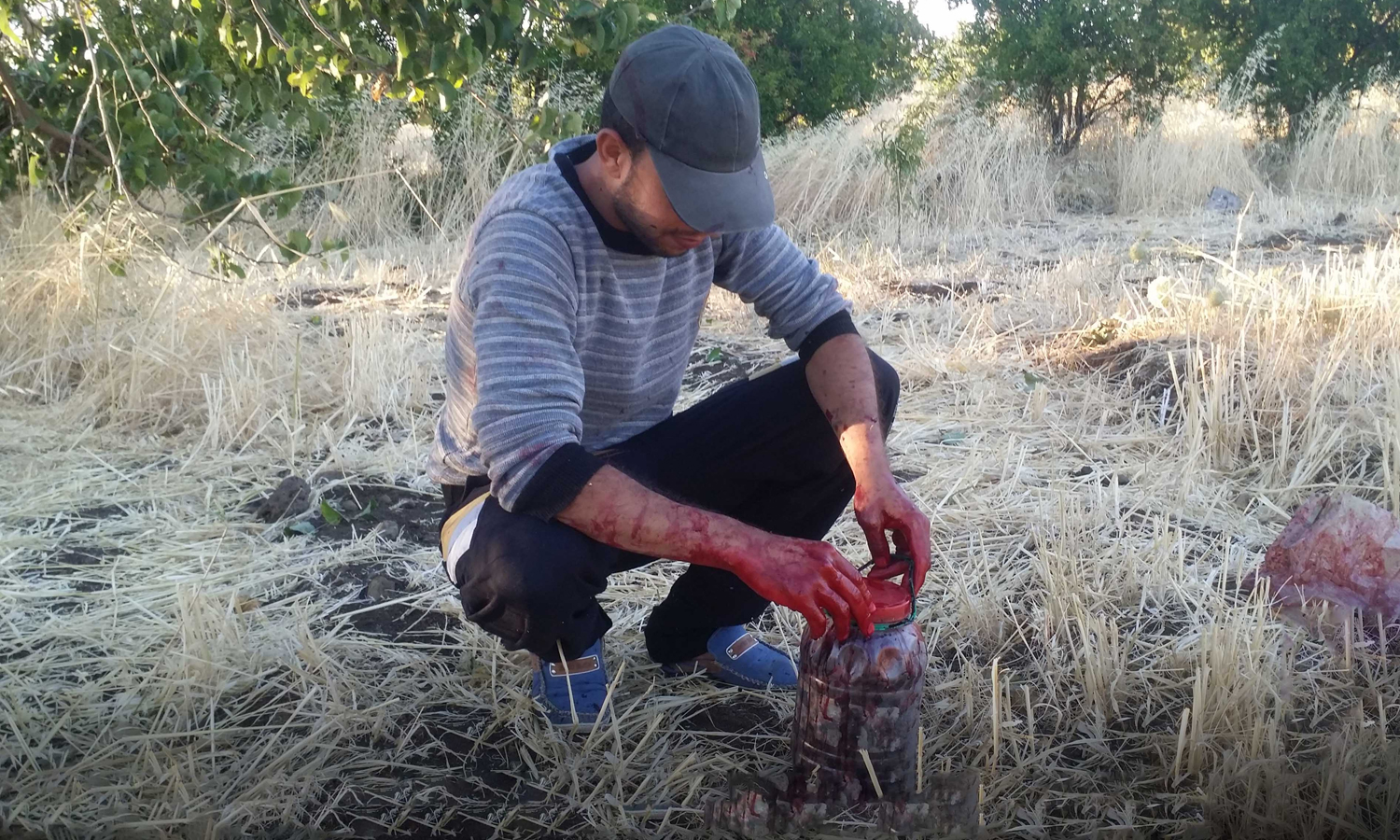 Mulberry harvest season in the countryside of Quneitra - 2016 (Step)